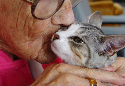 healing powers of animal therapy essay Integrative techniques such as laughter therapy can ease pain and lift mood  during cancer treatment, studies  the healing power of laughter.
