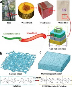 High Haze Paper Might Replace The Plastic Substrates Of Solar Cells