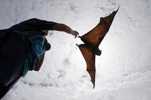 Biomimicry: Robotic Bats Might Fill the Skies Soon
