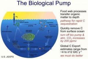 Nothing Dies in Ocean: The Biological Pump