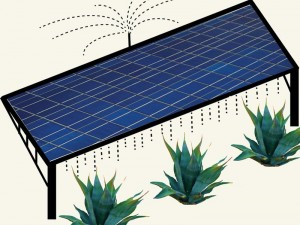 Photovoltaic Panels and Agave Cultivation: A New Model for Solar Farms