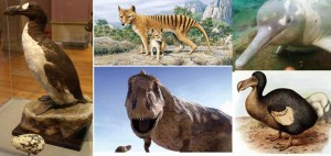 10 Extinct Species of Animals That Ruled in Yester Decades: Wild Life That Was