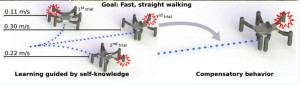 Damaged Robot learns to Hobble Quickly: Coping with Limb Loss