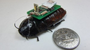 Biomimicry: Cyborg Cockroach would be the New Rescuers