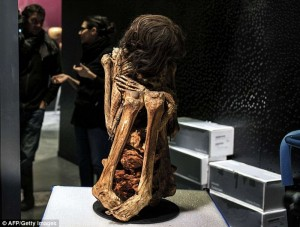 Peruvian Mummy curled up for 1,000 years: Human Remains on Display