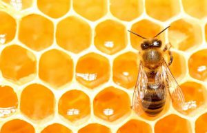 Queen Bee's Tooting Initiates Swarming: Preserving Biodiversity