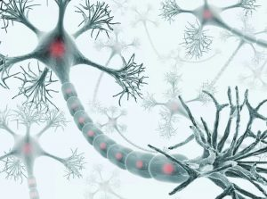 Specialized Grafts Behaved Like Neurons: Spinal Cord Injury